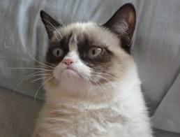 """Čuveni internet mim """"Grumpy Cat"""", tj. džangrizava mačka"""