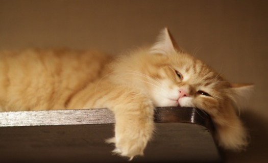 Lazy-Cat-Pictures-640x400