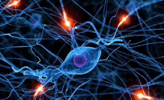 Sixth-Sense-discovered-for-numerosity-using-fMRI-scanning-e1378747835419