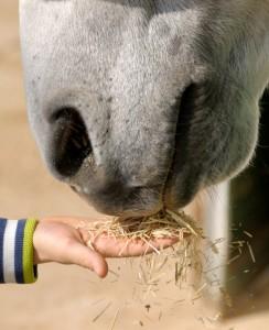 child-horse