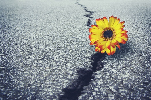 bigstock-Flower-In-Asphalt-6418224