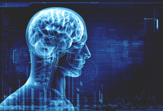 mozak