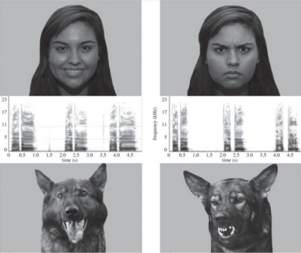 Psi značajno duže posmatraju izraze lica koji se podudaraju sa emocionalnim stanjem ili intenzitetom vokalizacije i kod ljudi i kod pasa (Foto: University of Lincoln press release)