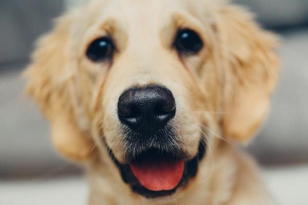 psi emocije